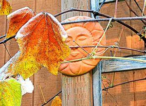 sunfrost